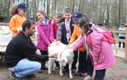 İlk Kez Keçi Gören Çocuklar Heyecanla Süt Sağdı