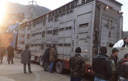 Genç Çiftçiler Koyunlarına Kavuştu