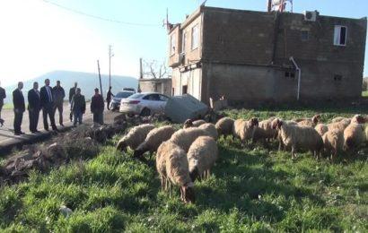 Hükümlülerin Yeniden Topluma Kazandırılmaları Projesi: Eski Hükümlüye 22 Koyun 1 Koç Verildi
