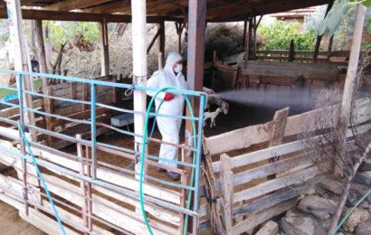 Kula'da Ağıl Dezenfeksiyon Çalışmaları Sürüyor
