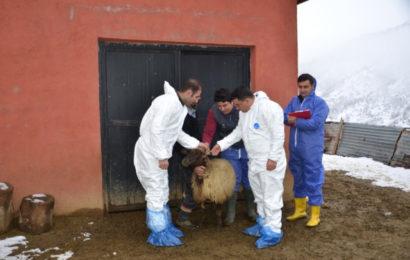 Tarım Müdürlüğünden Hayvan İşletmelerine Ziyaret