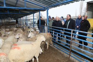 Bursa'da Genç Çiftçilere Küçükbaş Hayvan Teslimatı