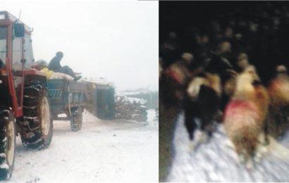 Konya'da Yaylada Mahsur Kalan Çoban ve Sürüsü Kurtarıldı