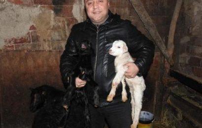 Çorum'da Biri Siyah Diğeri Beyaz Keçi Yavruları Şaşırttı