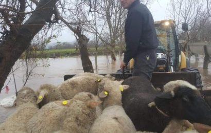Sel Baskınında Mahsur Kalan Koyun ve Köpekler Kepçeyle Kurtarıldı