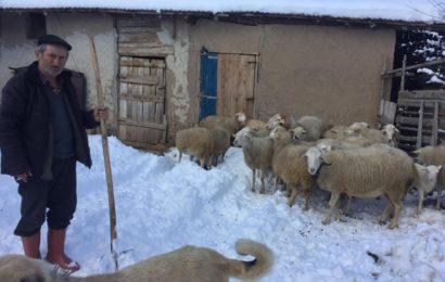 Kar Yağışı Küçükbaş Hayvancılığı Olumsuz Etkiledi