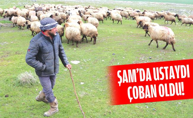 Şam'da Kapı ve Pencere Ustasıydı, Türkiye'de Çobanlığı Tercih Etti!