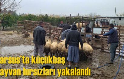 Tarsus'ta Küçükbaş Hayvan Hırsızları Yakalandı
