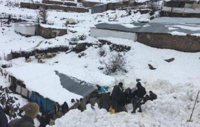 Çukurca'da Ahırların Üzerine Çığ Düştü: Küçükbaş 50 Hayvan Telef Oldu