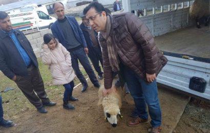 Siirtli Genç Çiftçilere 306 Küçükbaş Hayvan Dağıtıldı