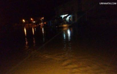 Şanlıurfa'da Sel Nedeniyle 20 Küçükbaş Hayvan Telef Oldu