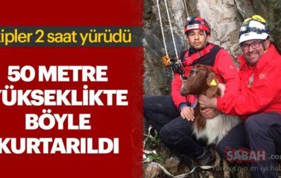 50 Metre Yükseklikte Mahsur Kalan Keçi Böyle Kurtarıldı